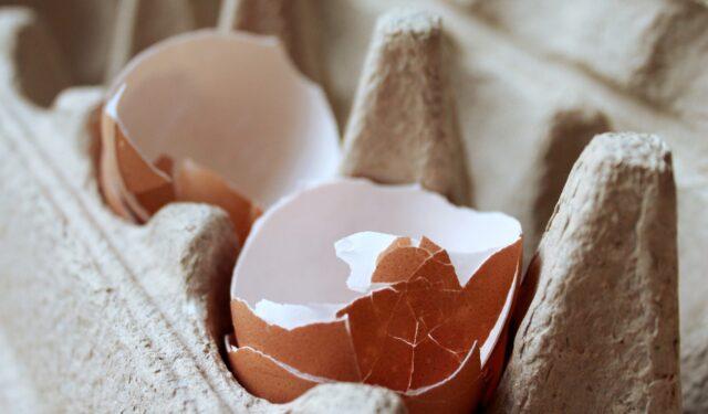 egg-3086198_1920